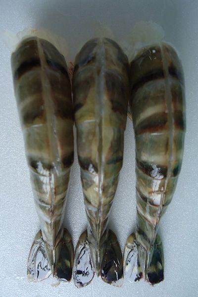 Headless Easy Peeled (EZP) Black Tiger Shrimp