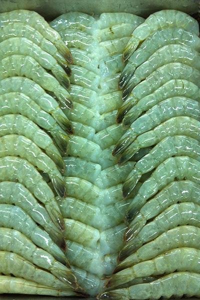 Headless Shell On (HLSO) Vannamei Shrimp